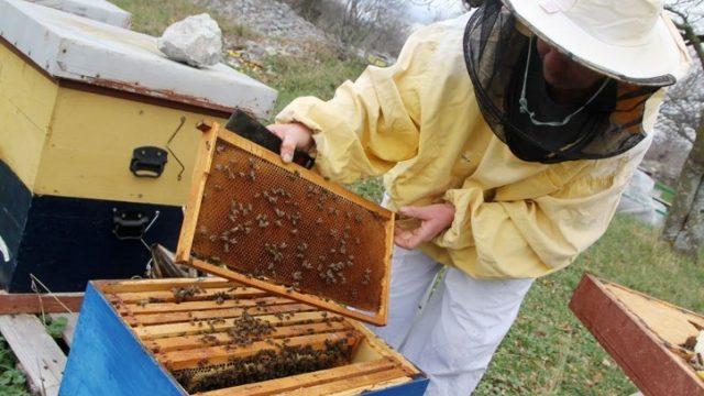 Najlošija godina za bh. pčelare