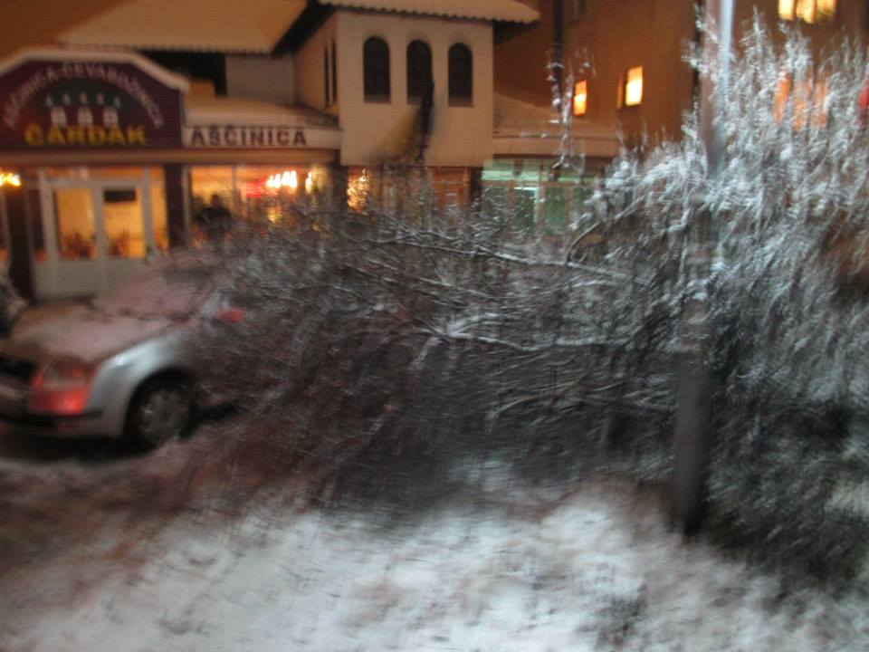 Vtrogasci uklanjaju drvo