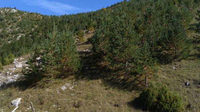 Briga o prirodi: Na Bjelašnici pošumljeno 165 hektara površine