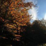 Jesenji umor i kako ga se riješiti