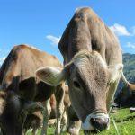 Turska vlada - odluka o uslovima certificiranja mesa iz BiH