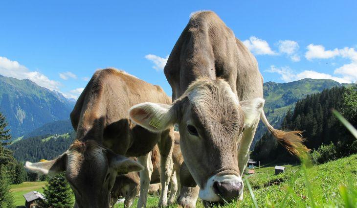 Vlada FBiH za poticaje animalnoj proizvodnji izdvaja više od 3,2 miliona KM
