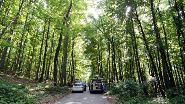Proizvodnja šumskih sortimenata manja za 16,5 posto