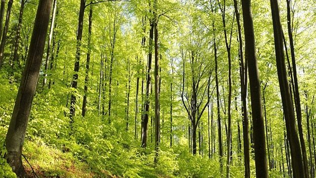 Zdravstveno stanje šuma u FBiH nije zadovoljavajuće