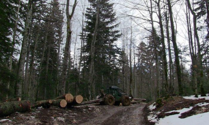 U FBiH smanjenje proizvodnje i prodaje šumskih sortimenata